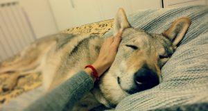 Vocabolario cane – uomo. Parte 2
