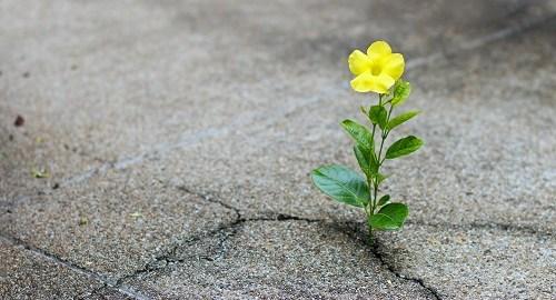 """Eva si racconta in """"Il Frutto della Passione"""": instagram come mezzo di speranza"""