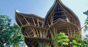 La magia del bamboo.