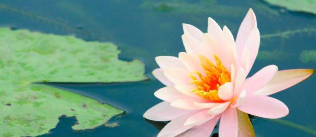 Qualunque fiore tu sia,quando verrà il tuo tempo, sboccerai