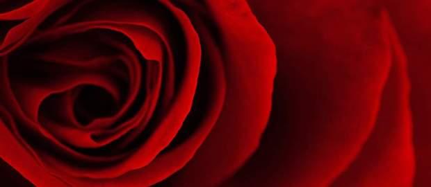 """""""Siamo rose!"""""""