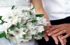 Cagare ai matrimoni