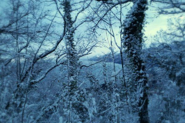 Oltre la finestra, un manto bianco: la prima neve