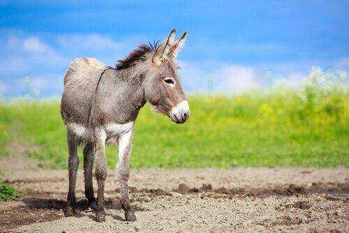 La bellezza del somaro: una riflessione sulla genitorialità