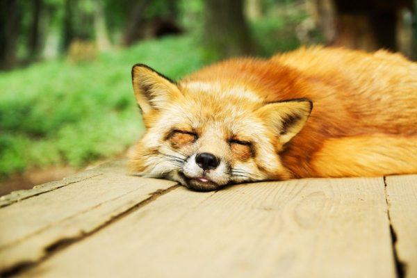 La qualità del sonno