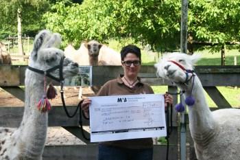 Rheingau-Lama-Trekking hilft kranken Kids 1