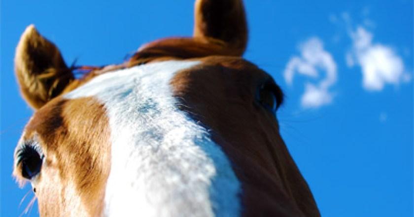 Neues vom Pferdeschänder in Guntersblum