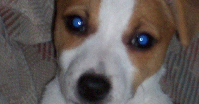 Autofahrer in Nierstein überfährt Hund und fährt weiter