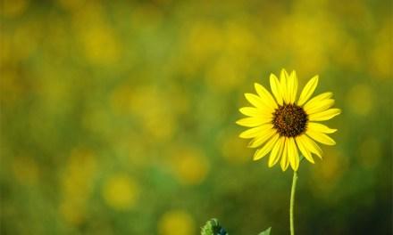 Kassen an Selbstpflücker-Blumenfeldern aufgebrochen