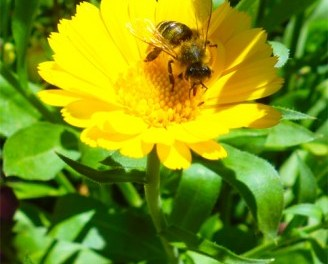 Geklaute Bienen und brennende Strohballen