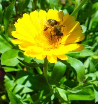 Wer klaut Bienenvölker und warum?