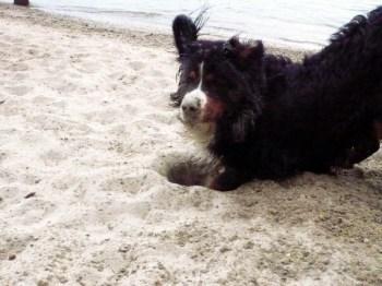 Hundehasser legen Giftköder aus. (Symbolbild: Andreas Lerg)