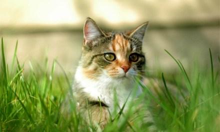 Katze in Nackenheim angeschossen