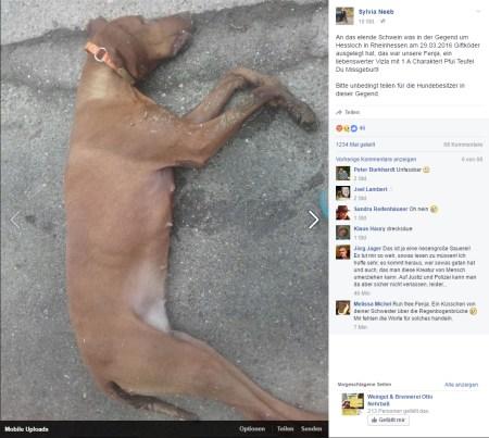 Trauer und Wut über den feigen Menschen, der Giftköder auslegt, sind diesem Facebook-Post zu entnehmen.
