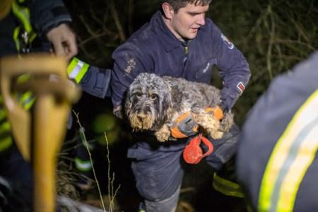 """Dackeldame """"Walli"""" wurde aus dem Fuchsbau gerettet. (Bild. Feuerwehr Mainz)"""