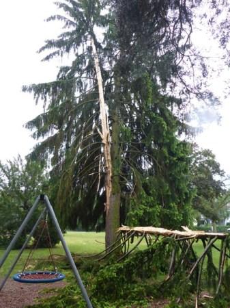 Der Blitz hat den Baum der Länge nach gespalten. (Bild: Feuerwehr Mainz)