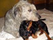 therapiehunde-aik-und-woody