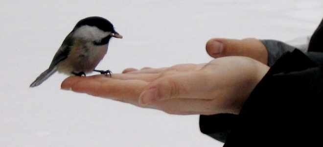 A Bird In The Hand (Photo by: Robbie1 on Flickr)