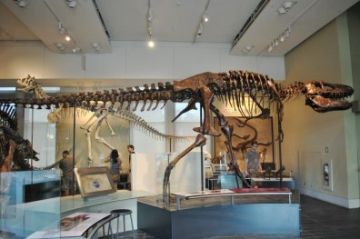 Dinosaurs at the Canadian Museum of Nature