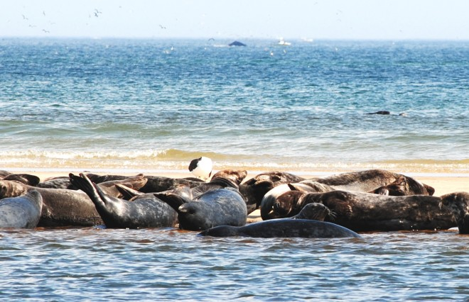 Perfect day at the beach: seals and whales at Cape Cod