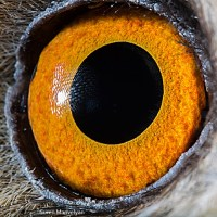 Extreme Macro Eye Photography