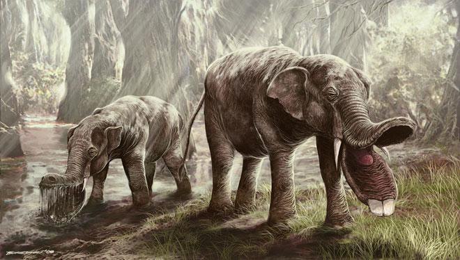 Image result for platybelodon