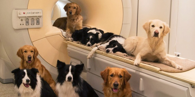 Brain Scans Show Striking Similarities Between Dogs and Humans