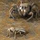 Wolf Spider Stalking Prey