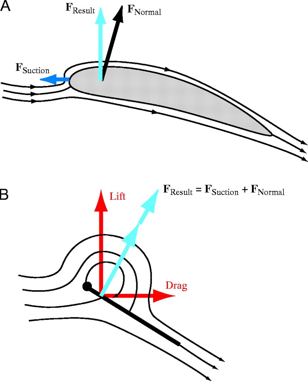 Science Graphic Of The Week Hummingbird Wing Aerodynamics