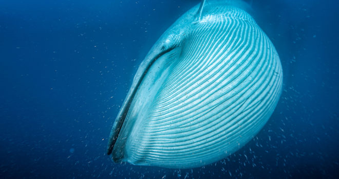 Why Are Whales So Dang Big? Science May Finally Have an Answer