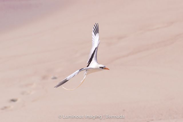 When we start to see these beautiful longtails returning we know that summer is on the way.