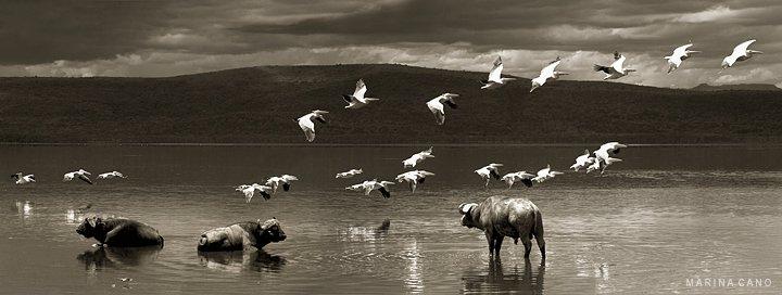 Nakuru Lake, Kenya. Foto: Marina Cano