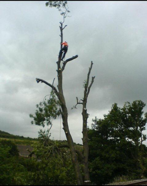 Wirral Tree Surgeons
