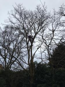 wirral tree surgeon