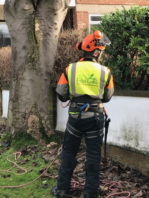 Wirral Tree Sugery