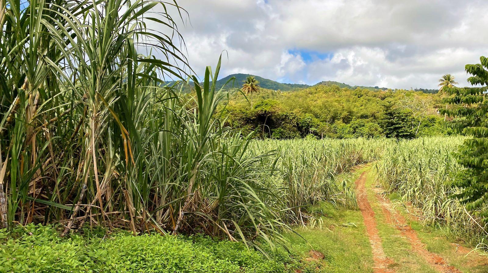 Defining Caribbean Rum – The CARICOM Rum Standard