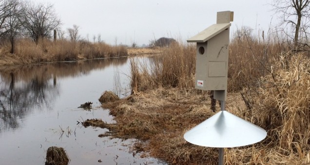 Waukesha County Wood Duck Box