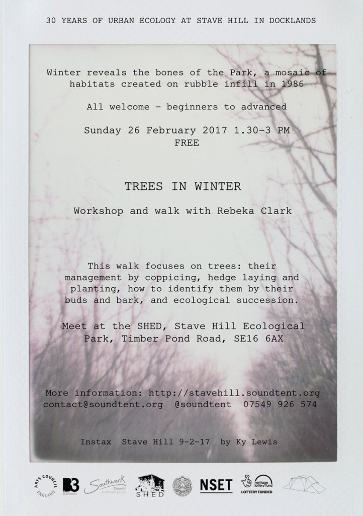Winter Trees Walk and Workshop