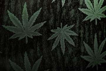 Marijuana legalization, explained