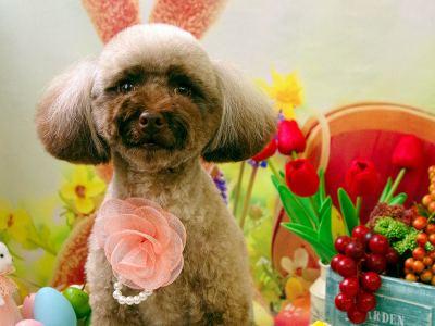 春のぽかぽか陽気!みんなでイースターをお祝いしよう♪