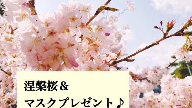 桜を見に&28日までの『マスク』プレゼントキャンペーン!!