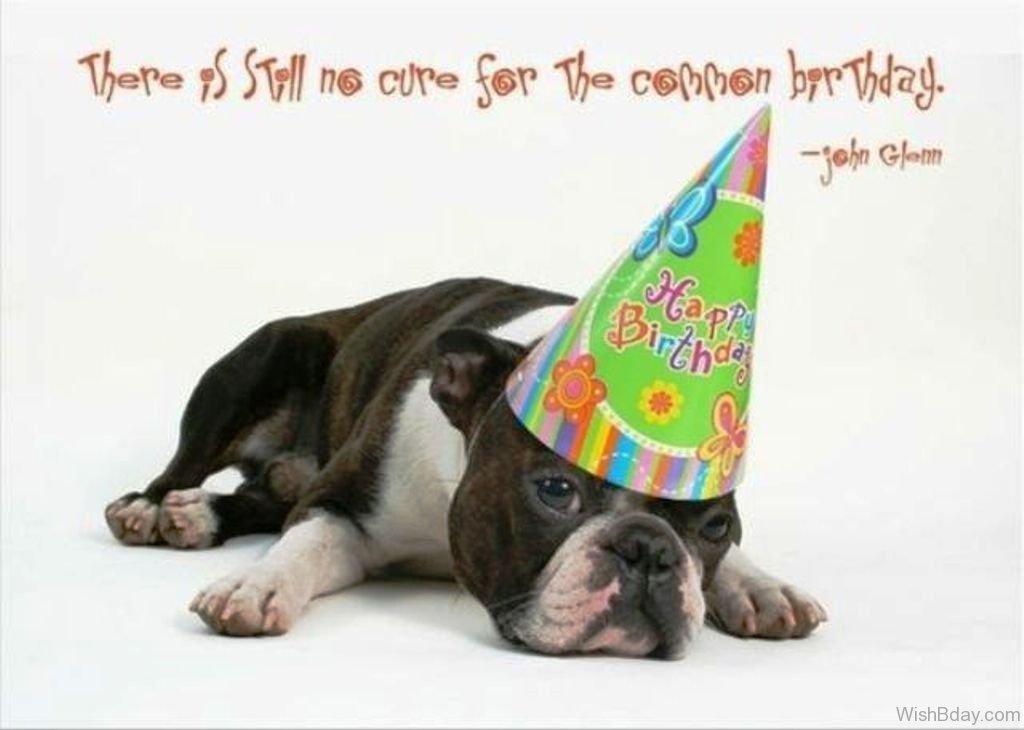 Happy Birthday Dog Quotes Funny 52 Quotes