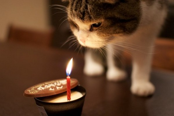 105 Birthday Wishes For Cats WishesGreeting