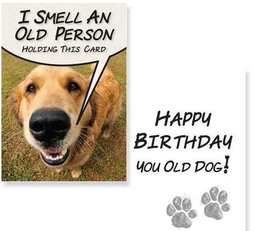 Birthday Wishes Dog