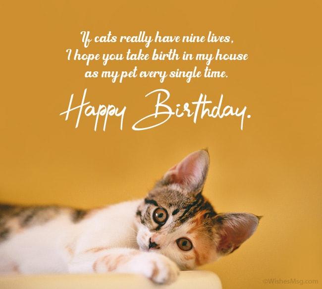 Birthday Wishes For Cat Happy Birthday Kitty Wishesmsg