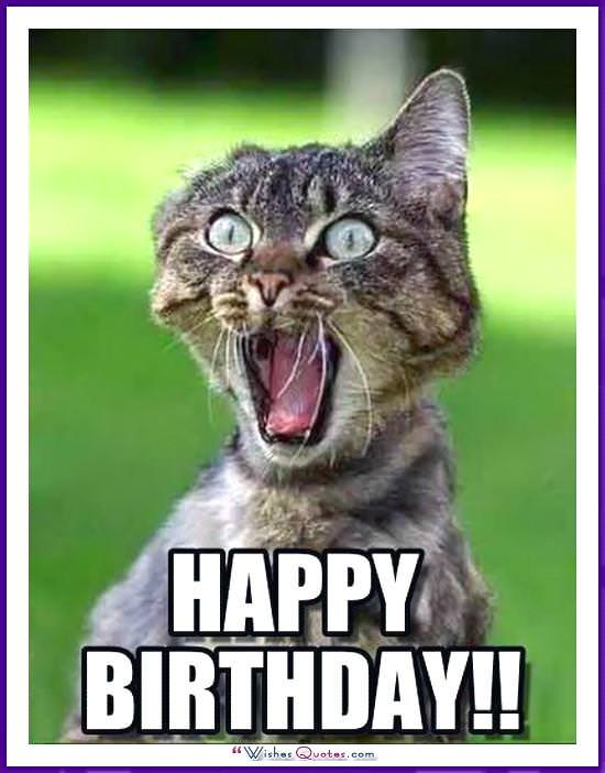 Happy Birthday Memes With Funny Cats Dogs And Animals