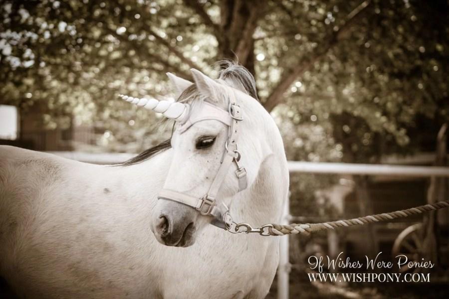 Unicorn Browband for Horse Pony