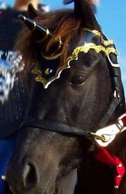 Unicorn Browband™ 2005