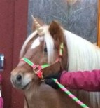 Contoured Natural-Look Unicorn Horn for Horses & Ponies