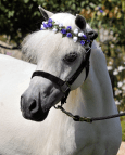 Floral Wreath for Horses & Ponies